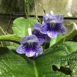 花の写真・画像素材[1579068]