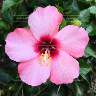 花の写真・画像素材[1579069]