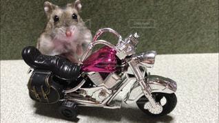オートバイに座っているハムスターの写真・画像素材[2412498]