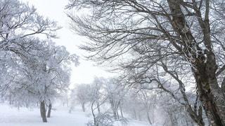 雪に覆われた木の写真・画像素材[972173]
