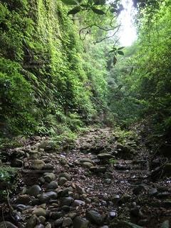 森の中の写真・画像素材[972215]