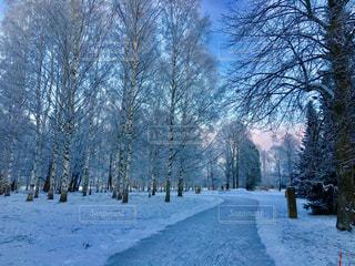 フィンランドの冬 雪の中 スケートの写真・画像素材[972315]