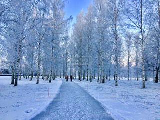 フィンランド雪の中でスケートの写真・画像素材[972320]