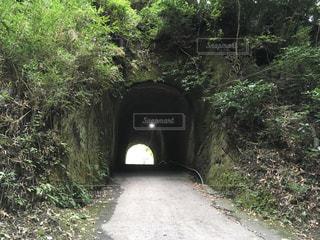 森の中のトンネルの写真・画像素材[972247]