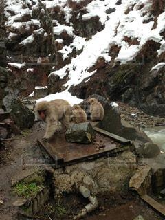 長野県 地獄谷温泉の写真・画像素材[972400]