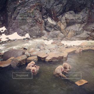 長野県 地獄谷温泉の写真・画像素材[972402]