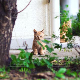 座る子猫の写真・画像素材[975291]