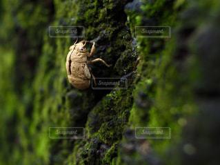 苔の抜け殻の写真・画像素材[976575]
