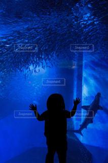 初めての水族館の写真・画像素材[2233452]
