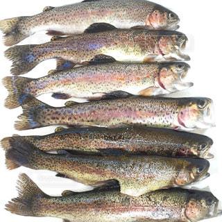 近くに魚のアップの写真・画像素材[972798]