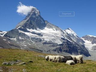羊の群れの写真・画像素材[986967]