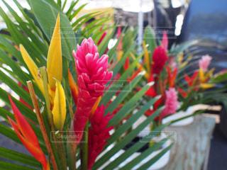 花のクローズアップの写真・画像素材[2509644]
