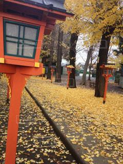 銀杏の絨毯 - No.973022
