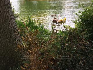 釣り中の兎 - No.973032