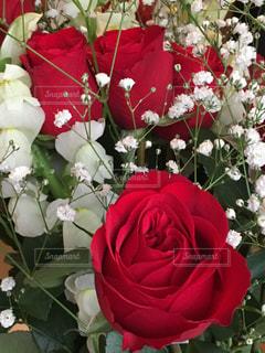 花束の写真・画像素材[973136]