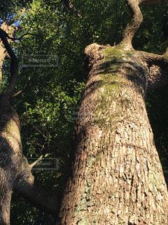 木の隣に立っている大きな象の写真・画像素材[1048476]