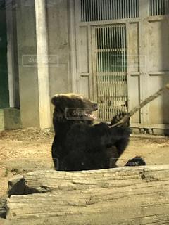 建物の上に座っている黒い熊の写真・画像素材[973593]