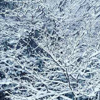 雪の写真・画像素材[996403]