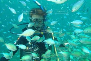 スキューバダイビング。美しい魚の群れの中✨の写真・画像素材[1725777]