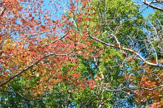 近くの木のアップの写真・画像素材[974351]