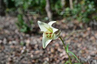 植物の白い花の写真・画像素材[974354]