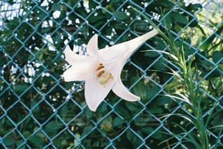 花の写真・画像素材[1502554]