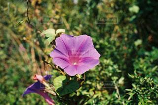 花の写真・画像素材[1502555]