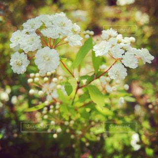 近くの花のアップの写真・画像素材[974643]