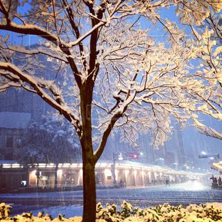 珍しく大雪に見舞われた京都の河原町の写真・画像素材[975550]