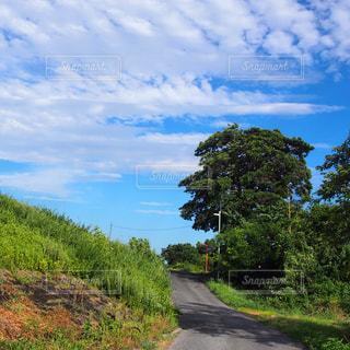 丘の木のパスの写真・画像素材[984749]