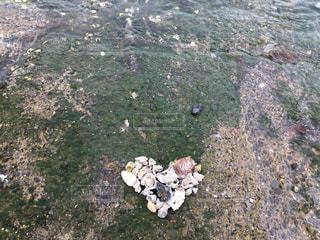 貝殻と心と海の写真・画像素材[986915]
