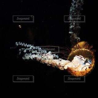 沈んで、沈んでの写真・画像素材[1117052]