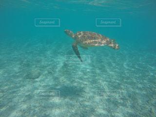 慶良間諸島でウミガメと遭遇の写真・画像素材[1076355]