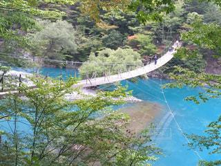 木々 に囲まれた水の体の上の橋の写真・画像素材[1162184]