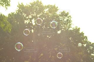 公園できらめくしゃぼん玉の写真・画像素材[1163156]