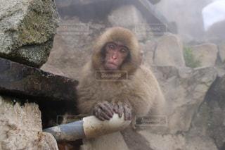 きょとん顔の猿の写真・画像素材[1769637]