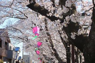 お花見日和の写真・画像素材[1942902]
