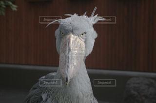 鳥の接写の写真・画像素材[2181123]
