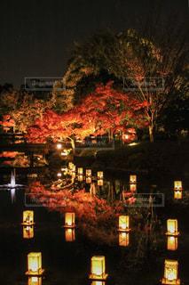 名古屋・白鳥庭園の紅葉の写真・画像素材[2241732]