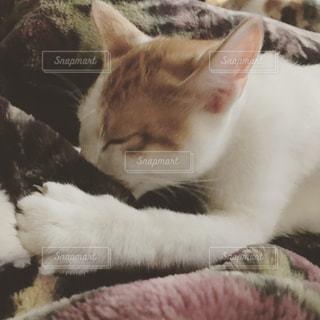 ベッドの上で横になっているオレンジと白猫の写真・画像素材[975055]