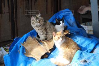 千光寺公園の猫さんの写真・画像素材[975089]