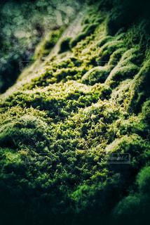 近くの緑豊かな緑の森の写真・画像素材[975734]