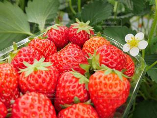 果物と野菜スタンドのグループ - No.977414