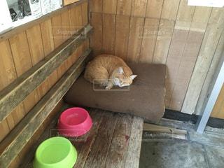 JR西日本 山陰本線 特牛駅の猫の写真・画像素材[979053]
