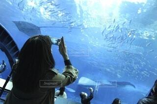 水族館で撮影をする女性の写真・画像素材[4057560]