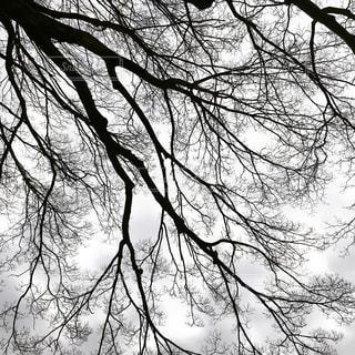 森の大きな木 - No.977489