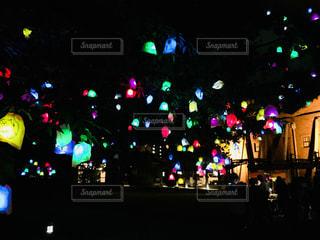 光る木のみのイベントの写真・画像素材[975649]