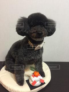 戌年のご挨拶をする犬の写真・画像素材[975707]