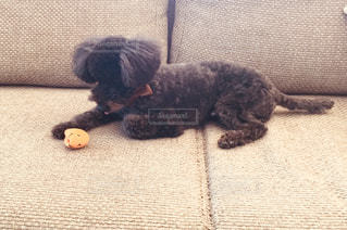 悩む犬の写真・画像素材[975838]