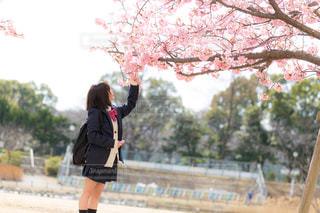 桜を愛でる女子高生の写真・画像素材[1777709]